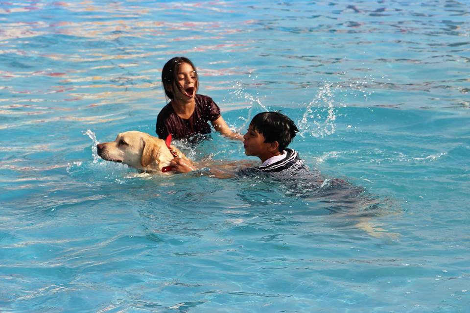 teach your dog social skills at the peppy paws pet resort