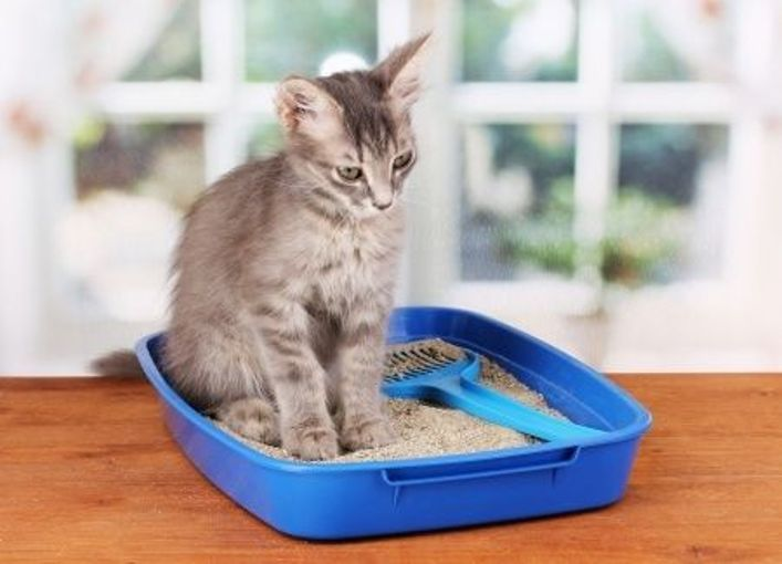 Cat Litter: Everything You Need To Know About It