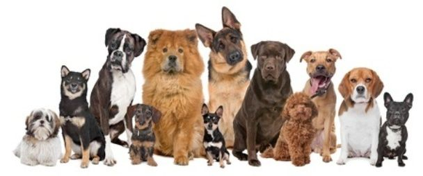 Choosing The Right Puppy For You And Your Family