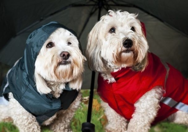 Dog Care In Monsoon: Keeping Your Pooch Fit And Healthy