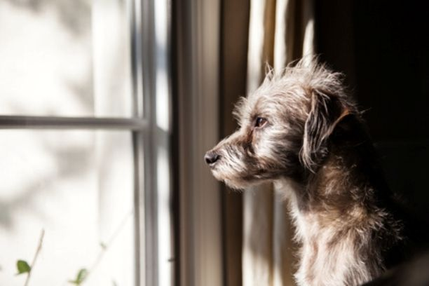 Separation Anxiety in Dogs: How To Ease It