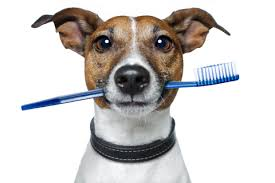 A guide to pet dental care